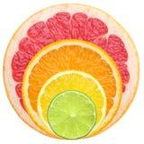 Juicy citrus Stock Images