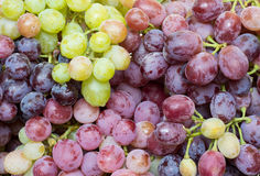 Juicy clusters of grapes. Most of ripe and juicy grapes, close-up. Juicy ripe berries Royalty Free Stock Photo