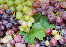 Juicy clusters of grapes. Juicy ripe grapes with a waxy coating Stock Photos