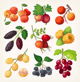 Juicy colorful berry icons. Juicy colorful berry set for label design. Illustration for cooking book or menu Royalty Free Stock Images