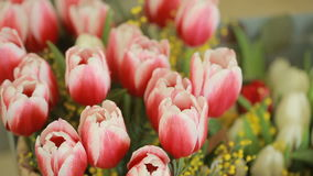 Juicy, colorful bouquet of different color tulips and mimosas, close-up. Background colors stock video