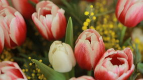 Juicy, colorful bouquet of different color tulips and mimosas, close-up. Background colors stock footage