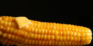 Juicy corn Royalty Free Stock Photos