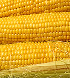 Juicy corn Royalty Free Stock Photography