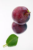 Juicy and delicious plum. With leaves on a light background Royalty Free Stock Photography