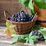 Juicy flavorful  grape  in basket Royalty Free Stock Photos