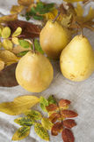 Juicy flavorful pears of background Royalty Free Stock Photography