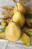 Juicy flavorful pears of background. Juicy flavorful pears of nature background Stock Images
