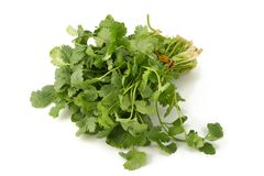 Juicy fragrant coriander Stock Photo