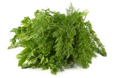 Juicy fragrant parsley and fennel royalty free stock photography