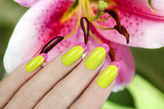 Juicy French manicure. Juicy French manicure of two colors on the background of lilies royalty free stock photos