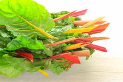 Juicy fresh chard leaves prepared for salad. Stock Images