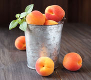 Juicy fresh peaches in a bucket Royalty Free Stock Photos