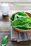 Juicy fresh spinach leaves Royalty Free Stock Photo