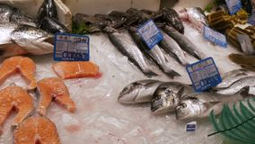 Juicy fresh tasty red fish fillets on a fish market in ice and many other various fish. Juicy fresh tasty red fish fillets on the fish market in ice and many stock video