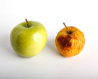Juicy fresh and wizened dried apples Stock Images