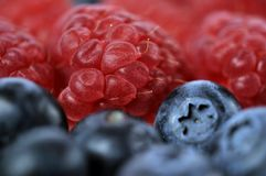 Juicy fruits Stock Photography