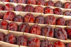 Juicy fruits of plums are spread out in even rows in the shop window royalty free stock images