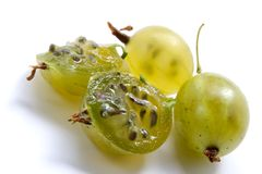 Juicy Gooseberry Stock Photography
