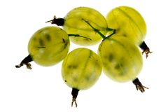 Juicy Gooseberry Royalty Free Stock Photos
