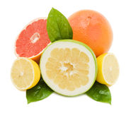 Juicy grapefruits with green leafs Stock Image