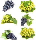 Juicy grapes Stock Photography
