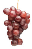 Juicy grapes Royalty Free Stock Photos