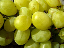 Juicy Grapes. A closeup view of yellow colored juicy grapes Royalty Free Stock Images