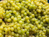 Juicy grapes Royalty Free Stock Image