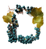 Juicy grapes or a frame with grape on the white Stock Images