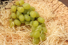 Juicy grapes Royalty Free Stock Photo