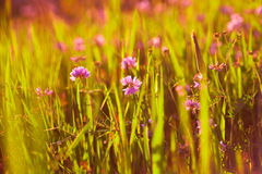 Juicy grass Royalty Free Stock Photography