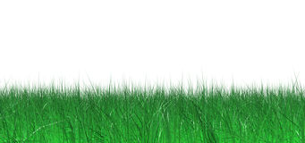 Juicy grass Royalty Free Stock Photos