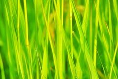 Juicy grass Royalty Free Stock Photo