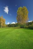 Juicy grass and autumn scenery. Juicy grass and beautiful autumn scenery royalty free stock images