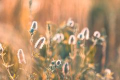 Juicy grass and gentle flowers in the field on a sunset backlight. Dolly shot, shallow depth of the field, toned photo royalty free stock photo