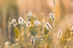 Juicy grass and gentle flowers in the field on a sunset backlight. Dolly shot, shallow depth of the field, toned photo royalty free stock photos