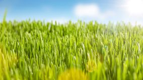 Juicy grass and sunshine. Green meadow with blue sky and sunshine. Blurred background and foreground Stock Photos
