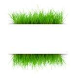Juicy grass under a sheet Stock Photos