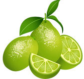 Juicy green citrus fruit. Scalable vectorial image representing a juicy green citrus fruit, on white stock illustration