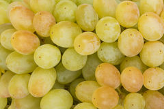Juicy green grapes close-up Royalty Free Stock Photography