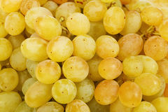 Juicy green grapes close-up Stock Images