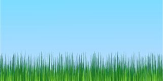 Juicy green grass blue sky background Stock Photography