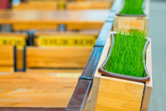 Juicy green grass in the pot in a city cafe Stock Photography