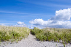 Juicy green grass on sand dunes on background of clouds Stock Photos