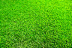 Juicy green herb Stock Photos