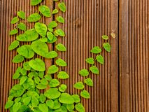 Juicy green leaves on the wooden wall. Natural summer background template