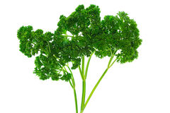 Juicy green parsley, isolated on a white Royalty Free Stock Image