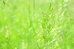 Juicy green summer grass on European beautifully blurred background Stock Photography