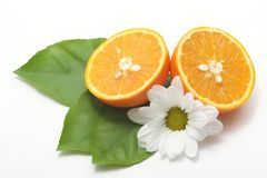 Juicy half oranges Royalty Free Stock Photos